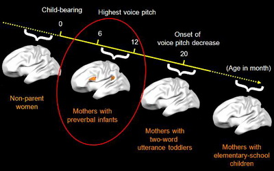 Brain activity of mothers with babies