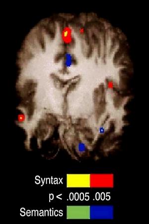 fMRI otak manusia menunjukkan pemprosesan sintaks (peraturan yang menguasai struktur sesuatu bahasa dan ungkapannya) dan semantik (makna) sedang berlaku!