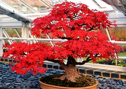 'Pakar' motivasi (Melayu) sebagai agen pem-bonsai-an fikiran ahli masyarakat Malaysia kontemporari...